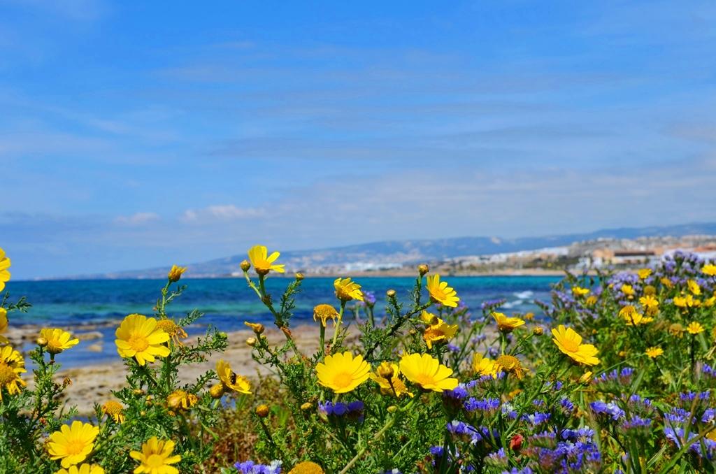flora kipra cvety rasteniya foto