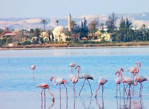 solenoe ozero larnaki na kipre ozero flamingo