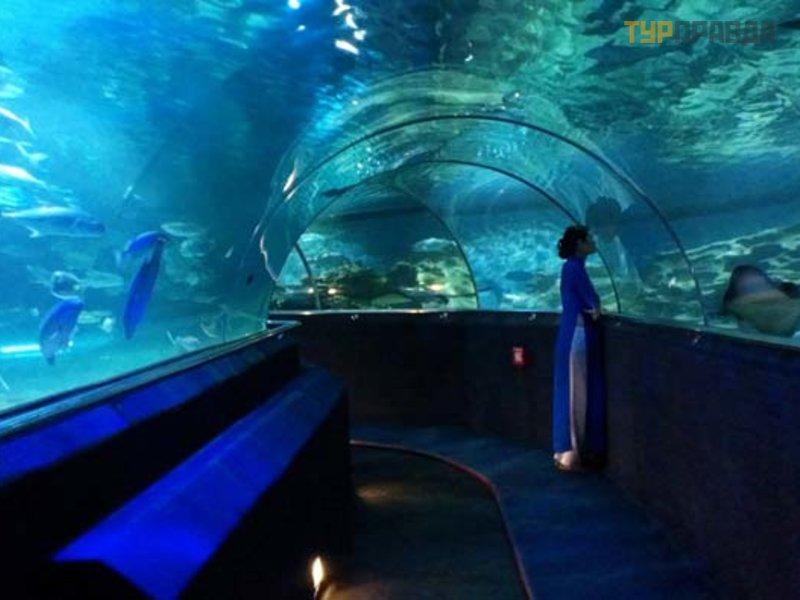 okeanograficheskij muzej i akvarium nyachanga